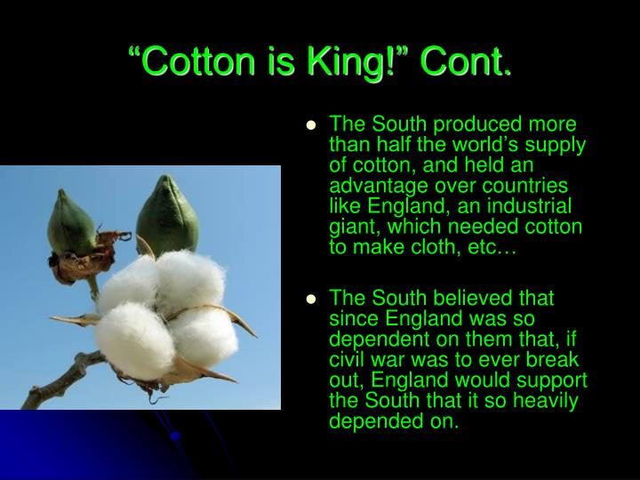 Cotton is king cont