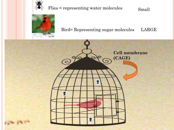 Flies = representing water molecules