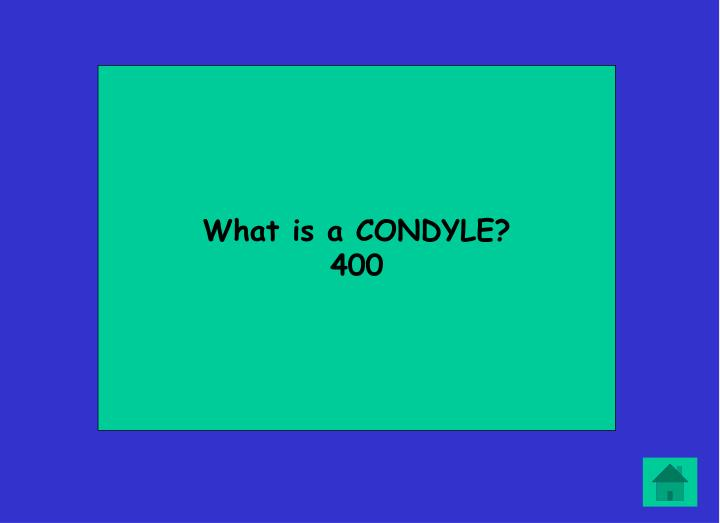 What is a CONDYLE?