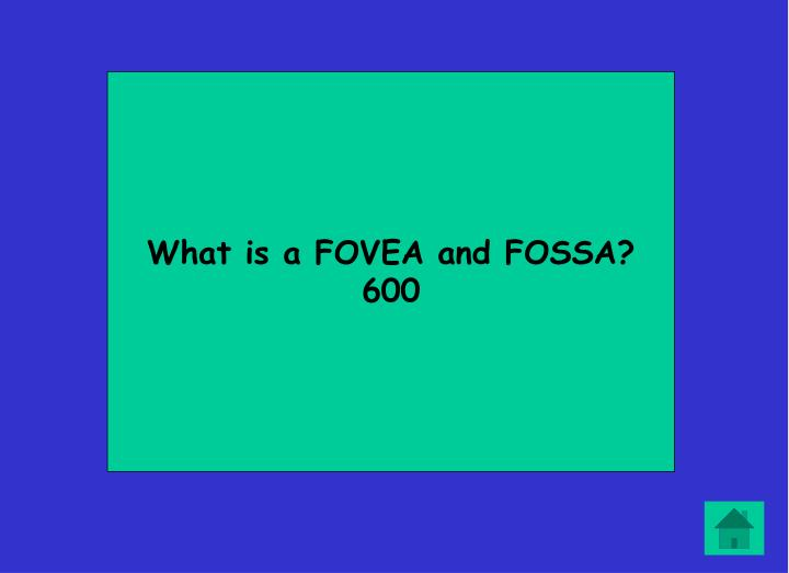What is a FOVEA and FOSSA?