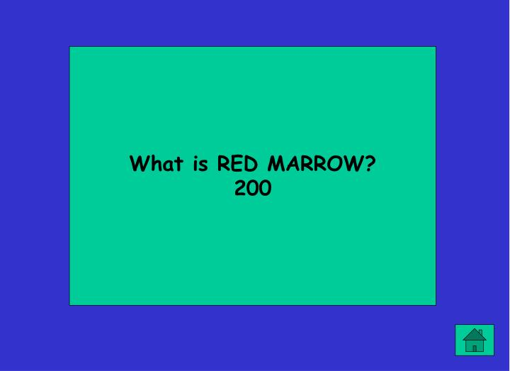 What is RED MARROW?