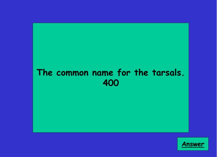 The common name for the tarsals.