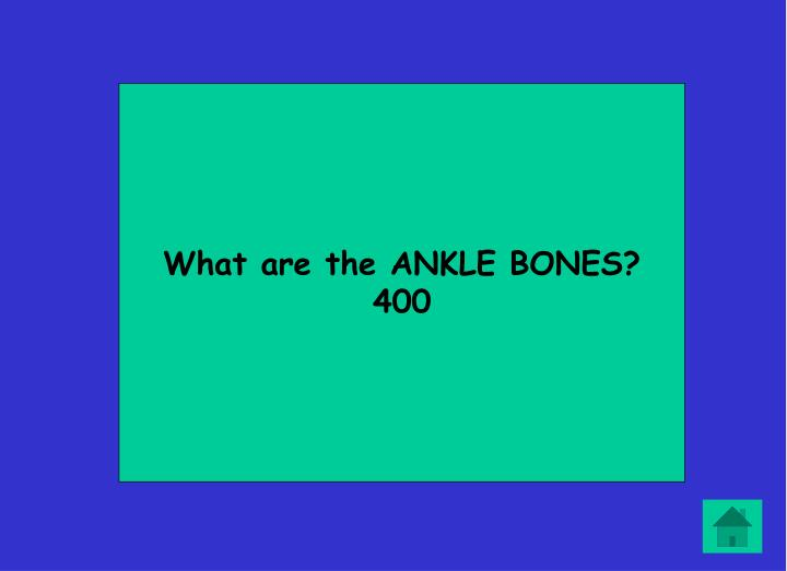 What are the ANKLE BONES?