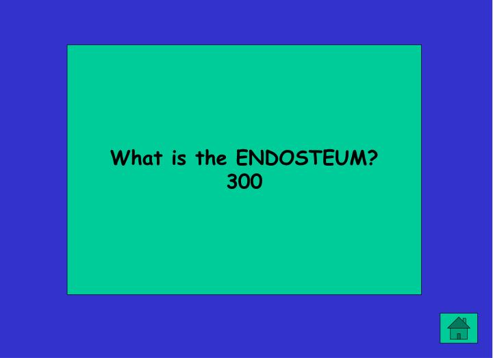 What is the ENDOSTEUM?