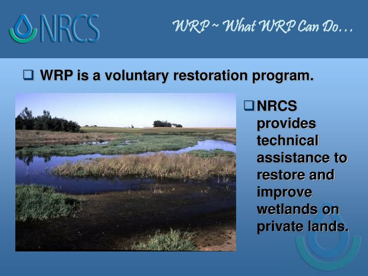 WRP ~ What WRP Can Do…