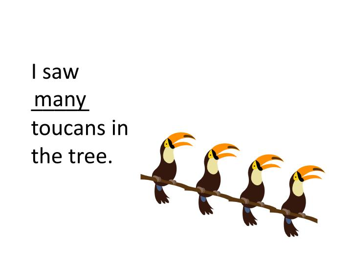 I saw _____ toucans in the tree.