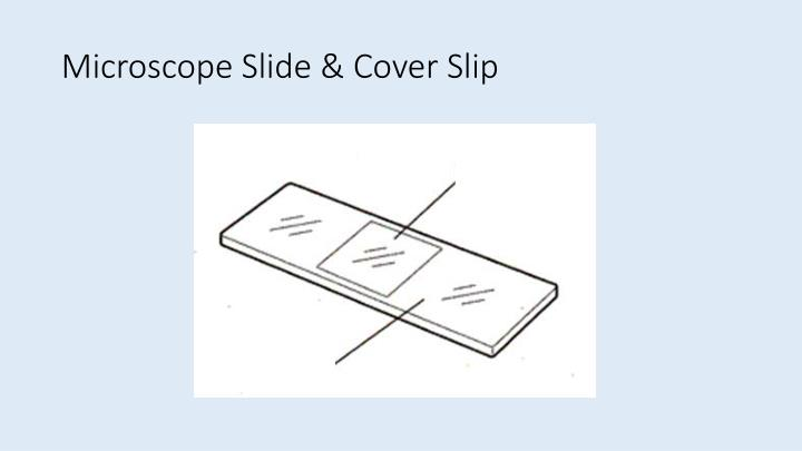 Microscope Slide & Cover Slip