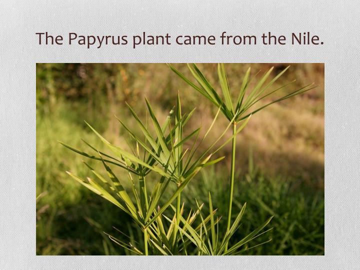 The Papyrus plant came from the Nile.