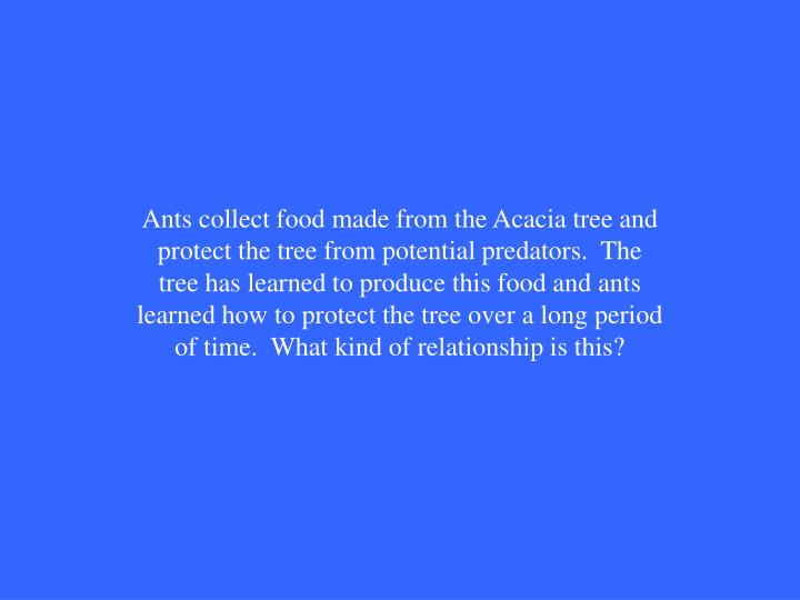 Ants collect food made from the Acacia tree and protect the tree from potential predators.  The tree has learned to produce this food and ants learned how to protect the tree over a long period  of time.  What kind of relationship is this?