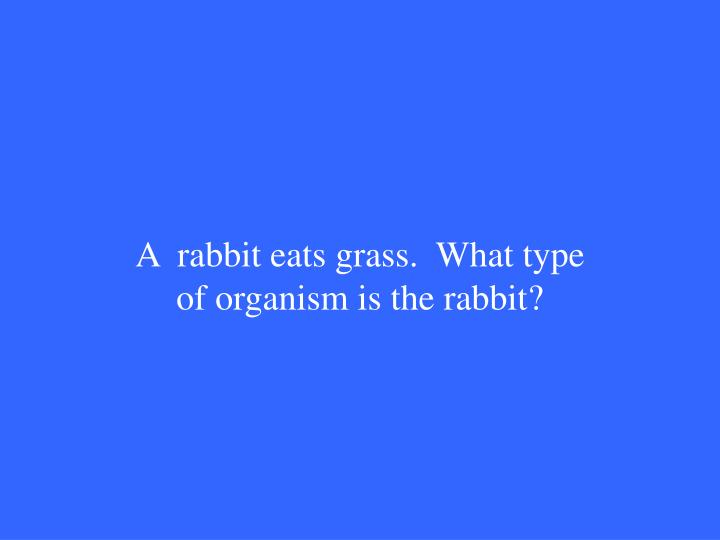 A  rabbit eats grass.  What type of organism is the rabbit?