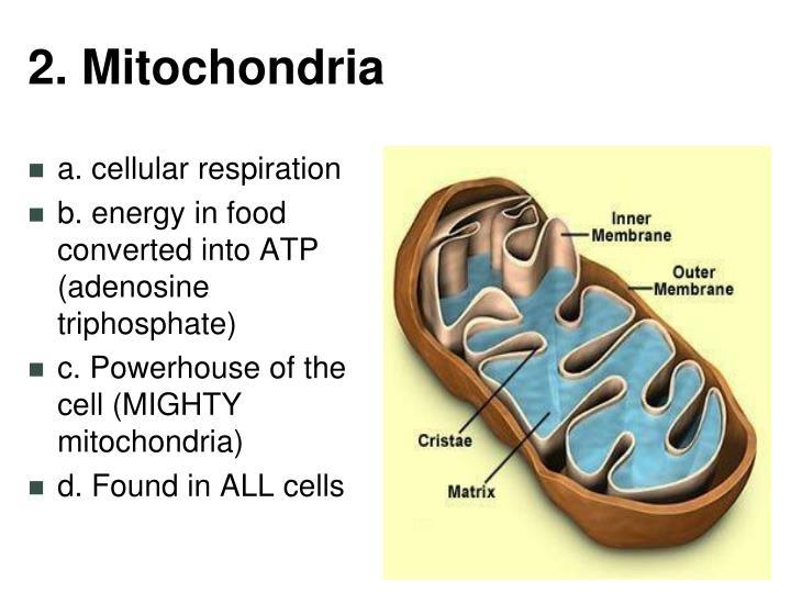 2. Mitochondria