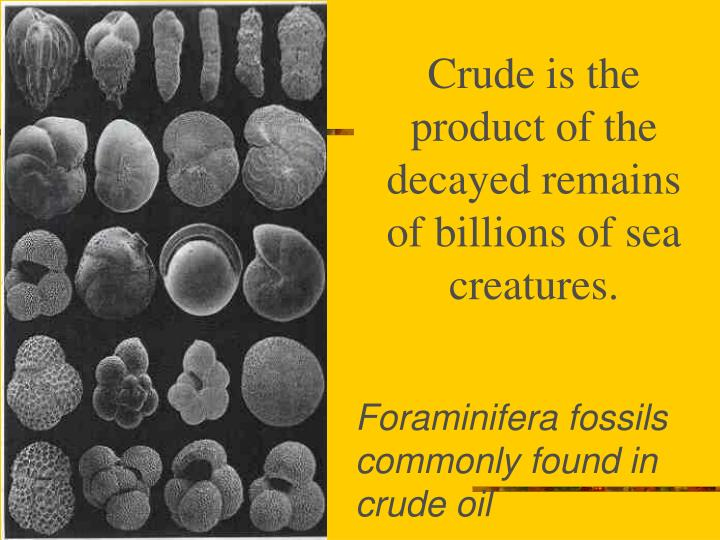 Crude is the product of the decayed remains of billions of sea creatures.