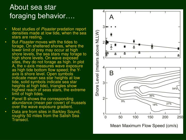 About sea star foraging behavior….