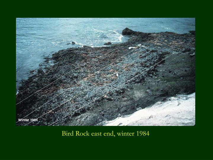 Bird Rock east end, winter 1984