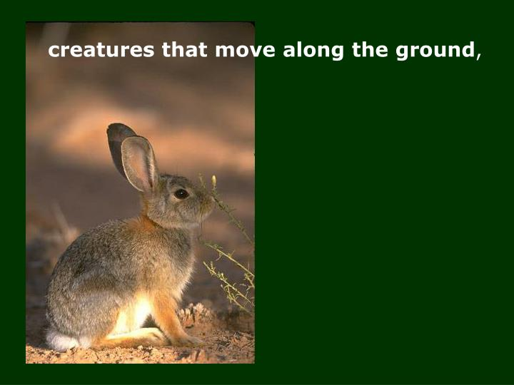 creatures that move along the ground