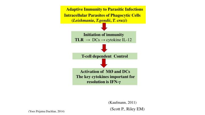 Adaptive Immunity to Parasitic Infections