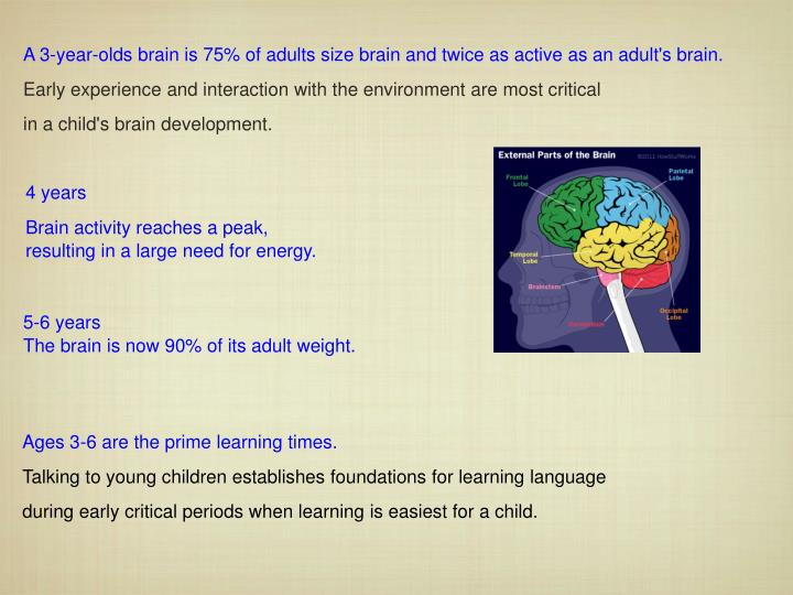 A 3-year-olds brain is 75% of adults size brain and twice as active as an adult's brain.