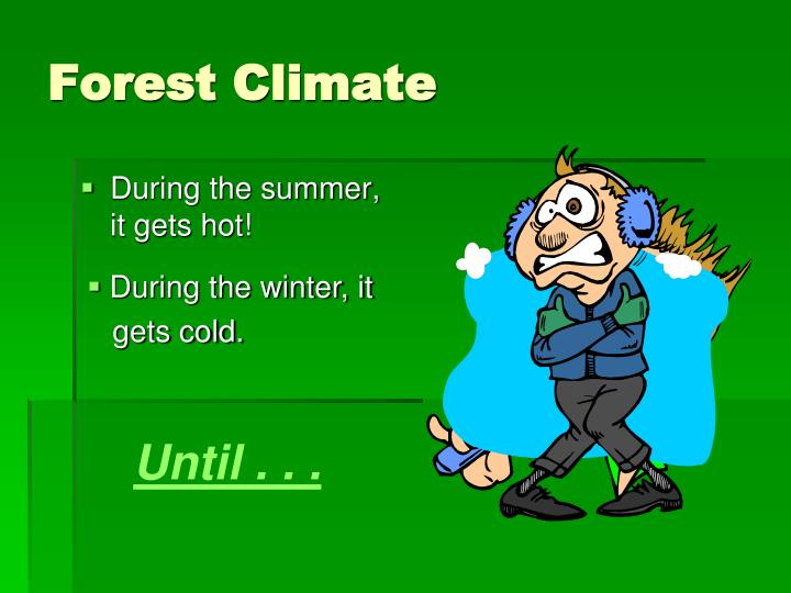 Forest Climate