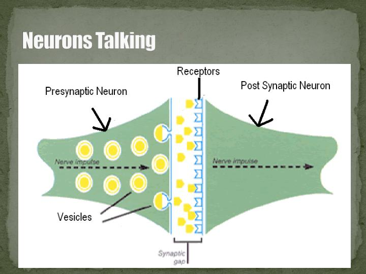 Neurons Talking