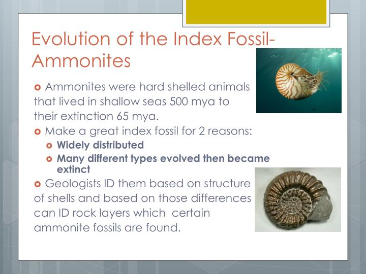 Evolution of the Index Fossil- Ammonites