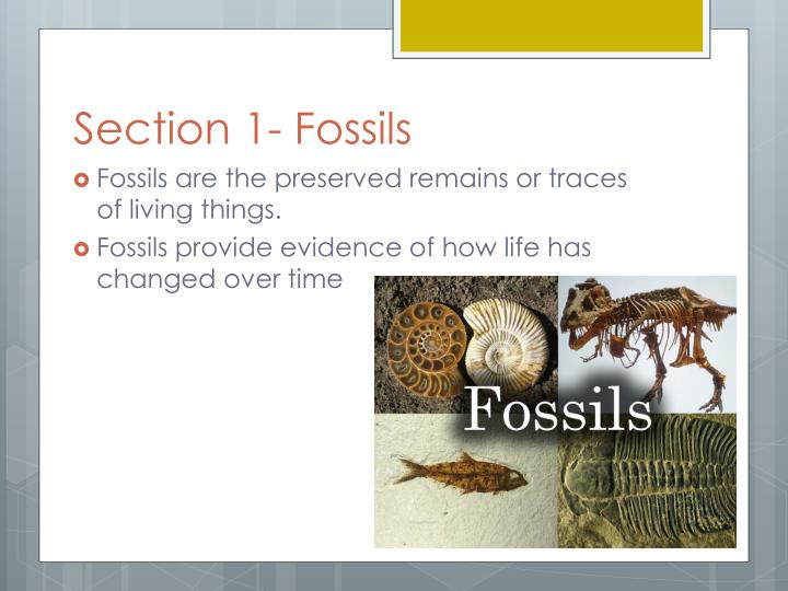 Section 1 fossils