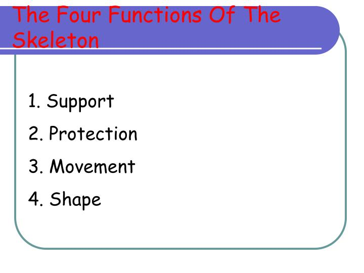 The Four Functions Of The Skeleton
