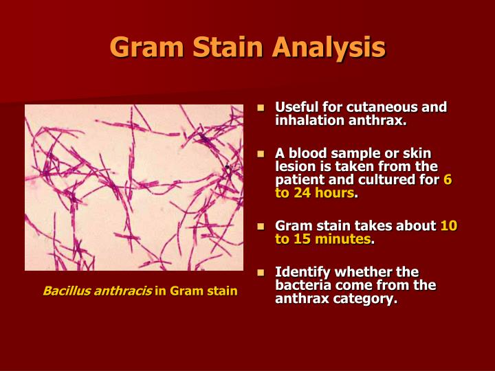 Gram Stain Analysis