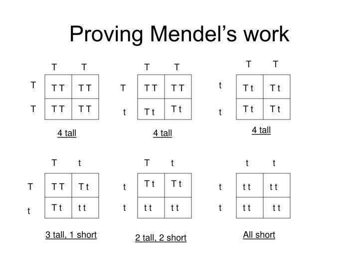 Proving Mendel's work