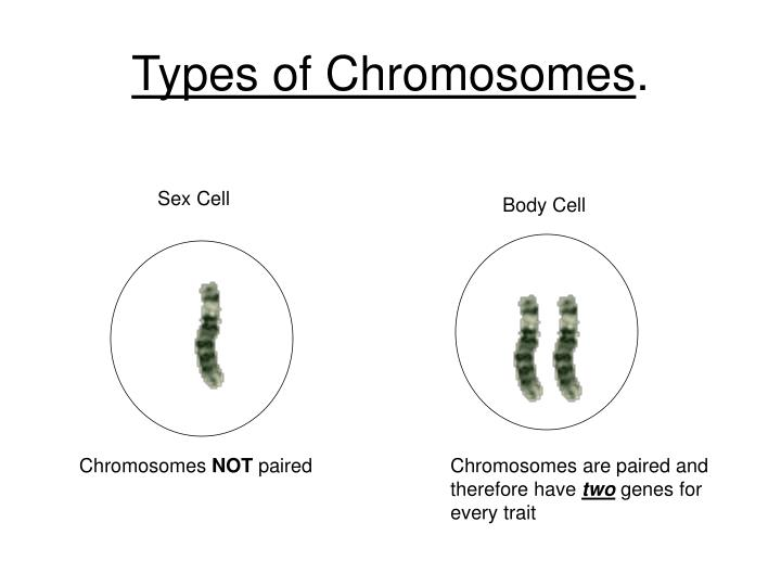 Types of chromosomes