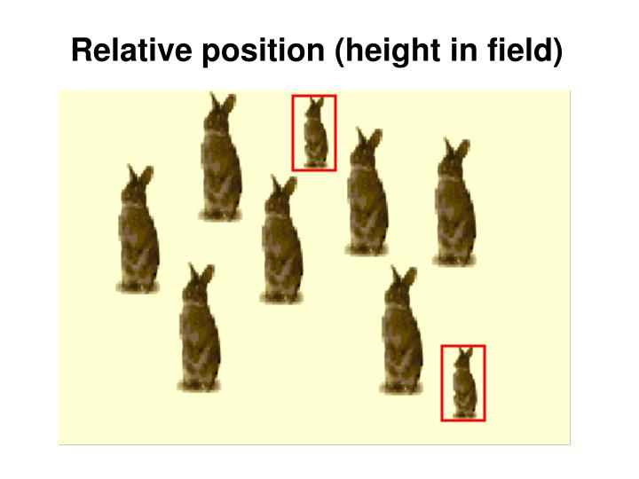 Relative position (height in field)