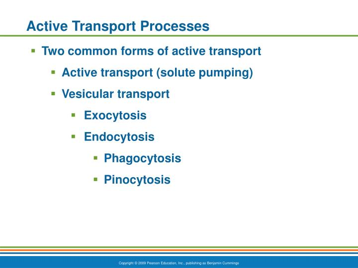 Active Transport Processes