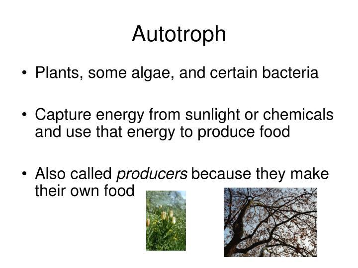 Autotroph
