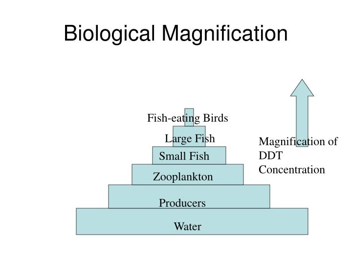 Biological Magnification