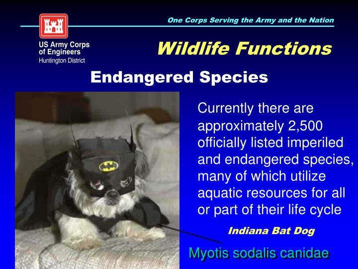 Wildlife Functions