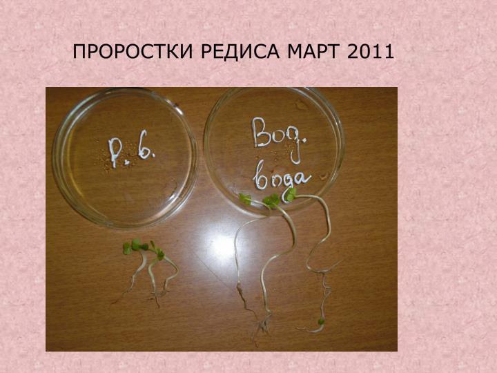 Проростки редиса Март 2011