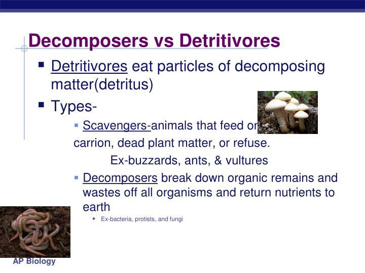 Decomposers vs Detritivores