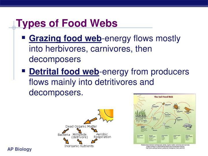 Types of Food Webs