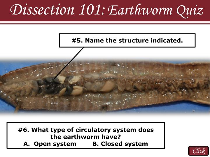 Dissection 101: