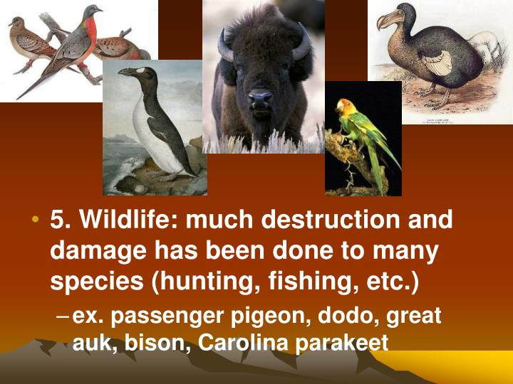 5. Wildlife: much destruction and damage has been done to many species (hunting, fishing, etc.)