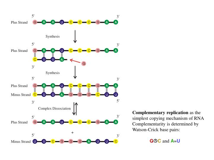 Complementary replication