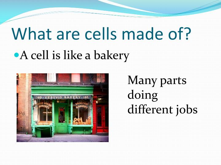 What are cells made of?