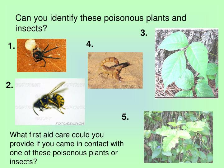 Can you identify these poisonous plants and insects?