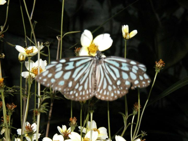 Butterfly… life continues