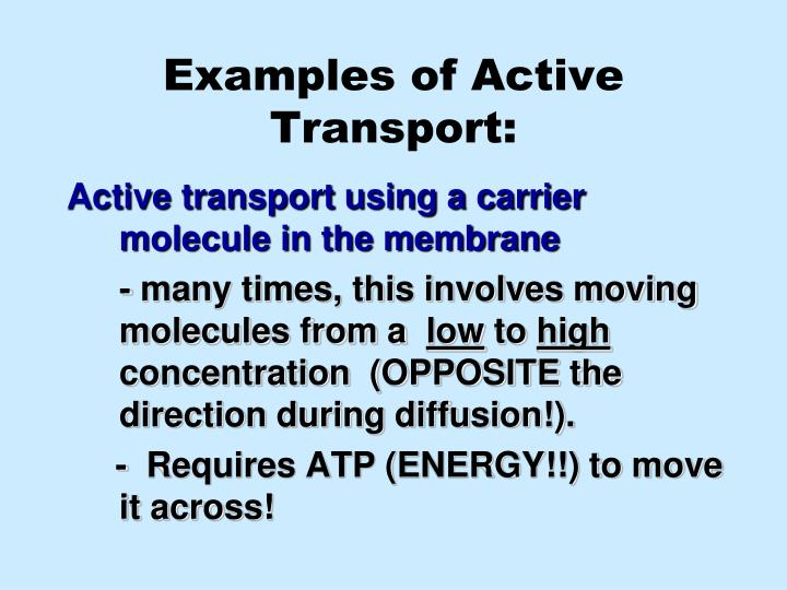Examples of Active Transport: