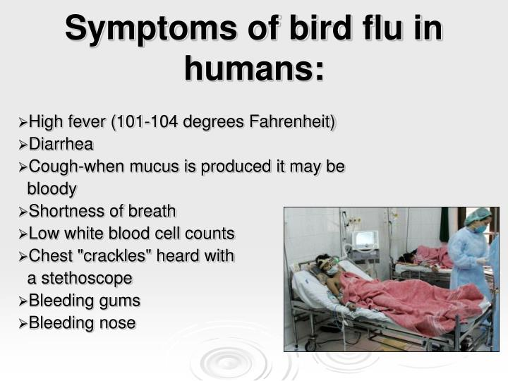 Symptoms of bird flu in humans: