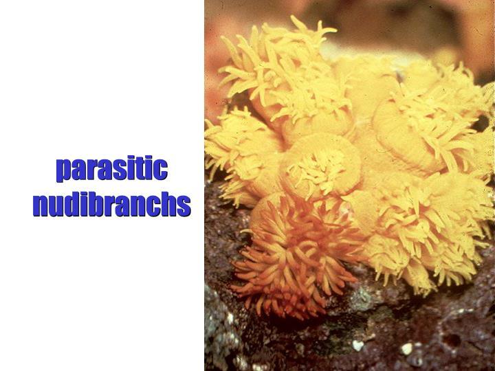 parasitic nudibranchs