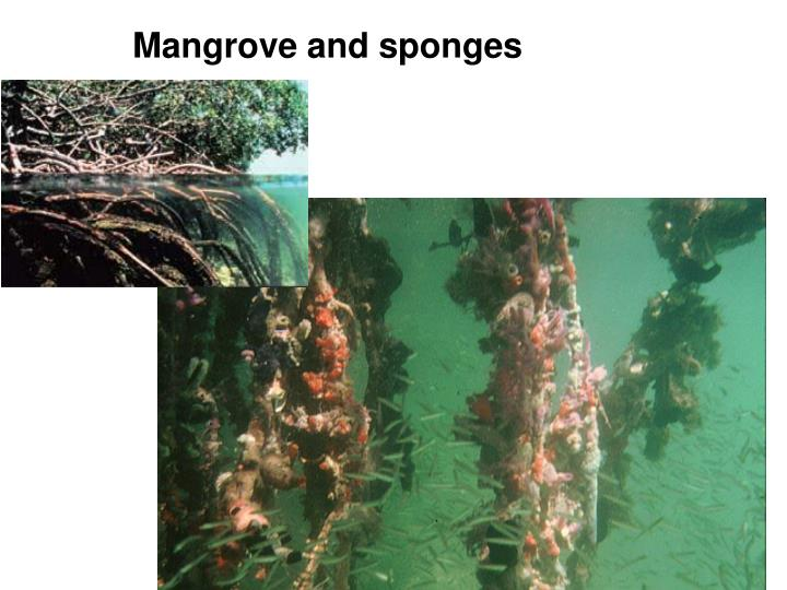 Mangrove and sponges