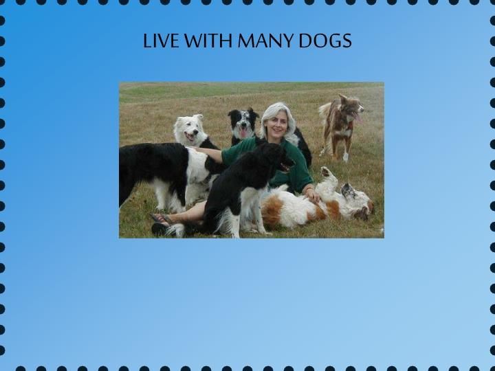 LIVE WITH MANY DOGS