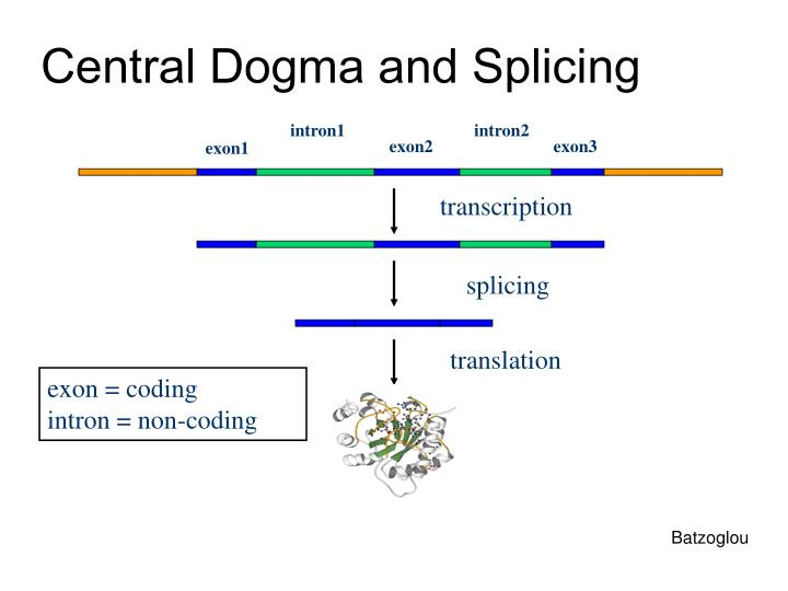 Central Dogma and Splicing