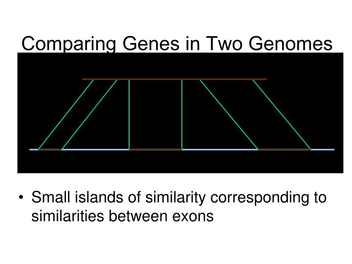 Comparing Genes in Two Genomes